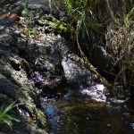 Tiny waterfall12