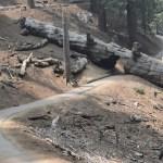 Trail thru a fallen sequoia trunk12