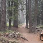 Trail to Tokopah Falls12