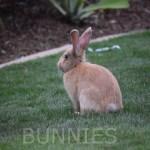Bunny12Bunnies