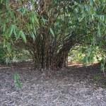 Bamboo arcade12