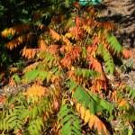 Colors of autumn12