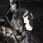 Lizard on a tree branch12