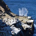 Ocean splash with seabirds12