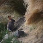 Bunny near his hiding spot12