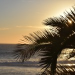 Sun setting behind palm leaves12