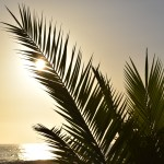 Sunset behind palm leaves12