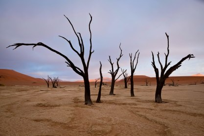 Over 1,000-year-old trees at Dead Vlei in Namibia create a perfect backdrop for photographers