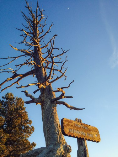 Perfect light against a perfect blue sky at Sunrise Point, Bryce Canyon