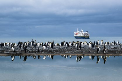 The National Geographic Explorer is docked off of Saint Andrews Bay in South Georgia Island as King penguins go on about their business