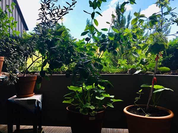 Permakultur Balkon produzieren Bio-Lebensmittel mit wenig Aufwand