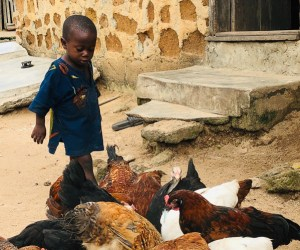 World Poultry Foundation Randall Ennis Visits Nigerian Village Flocks