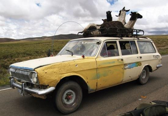 Llama Car