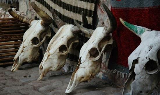 Bull Skulls Along Cobblestone Streets in Loreto