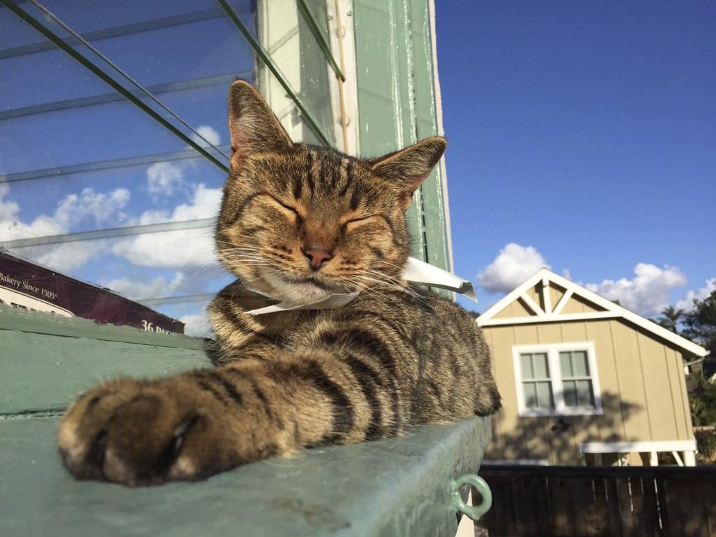 dar-es-salaarm-forks-cat-allan-karl-12
