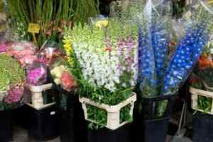 urban-flower-market-scholarship