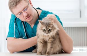 top-careers-working-with-animals-and-jobs