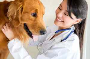 veterinary-medicine-california