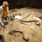 Paleontology: Things to Keep in Mind