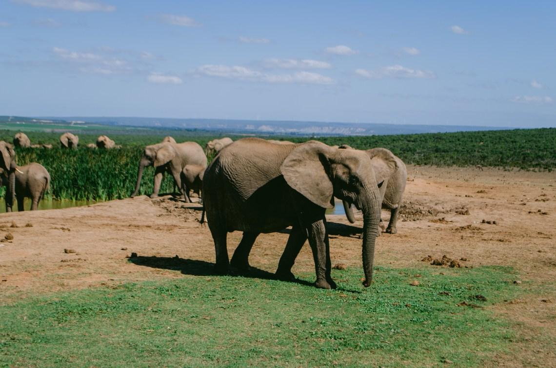 addo-elephant-park-11