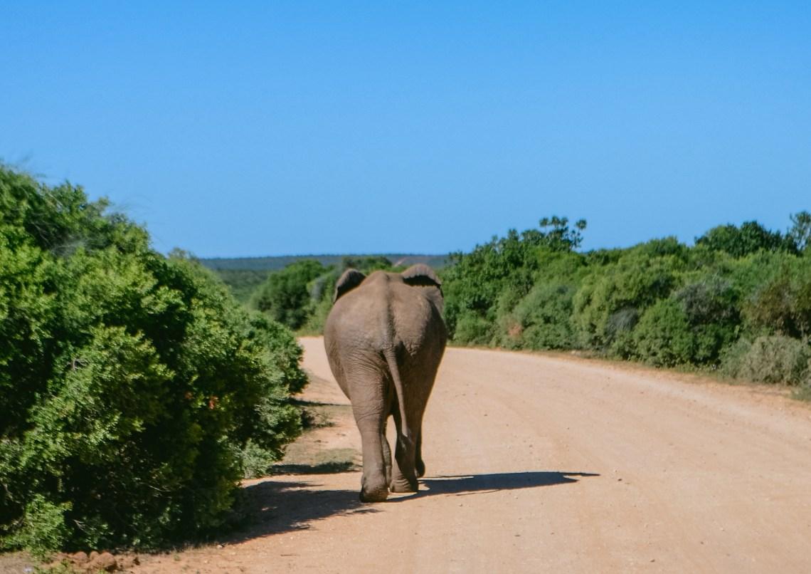 addo-elephant-park-30