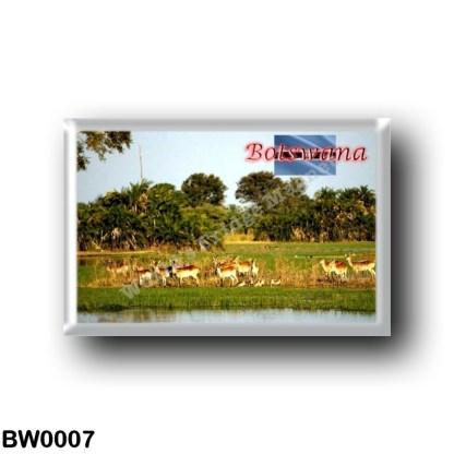 BW0007 Africa - Botswana - Group of Female Lechwe