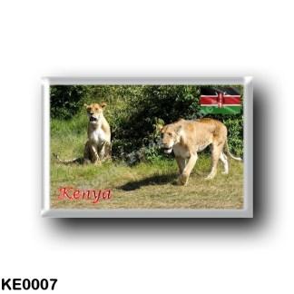 KE0007 Africa - Kenya - Lions