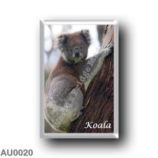 AU0020 Oceania - Australia - Koala