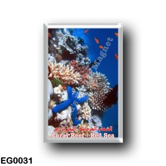 EG0031 Africa - Egypt - Red Sea - Coral Reef - Biodiversity