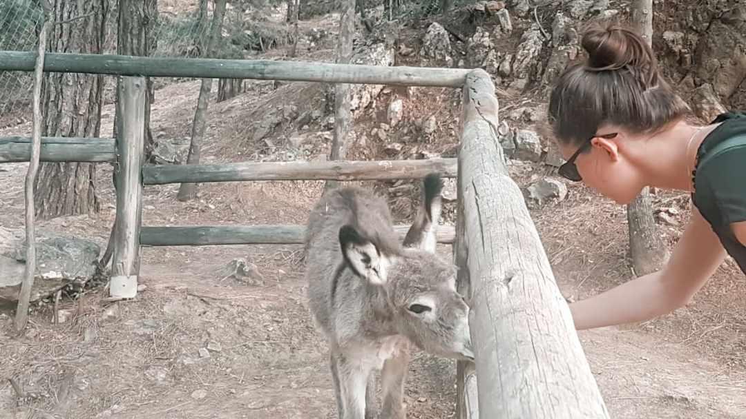 201805-kos-greece-donkey-nature