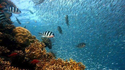 大学 海洋学