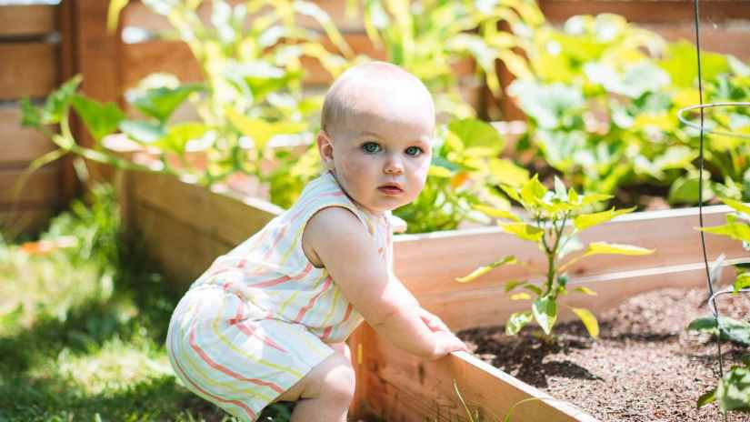 how-to-make-front-yard-vegetable-garden