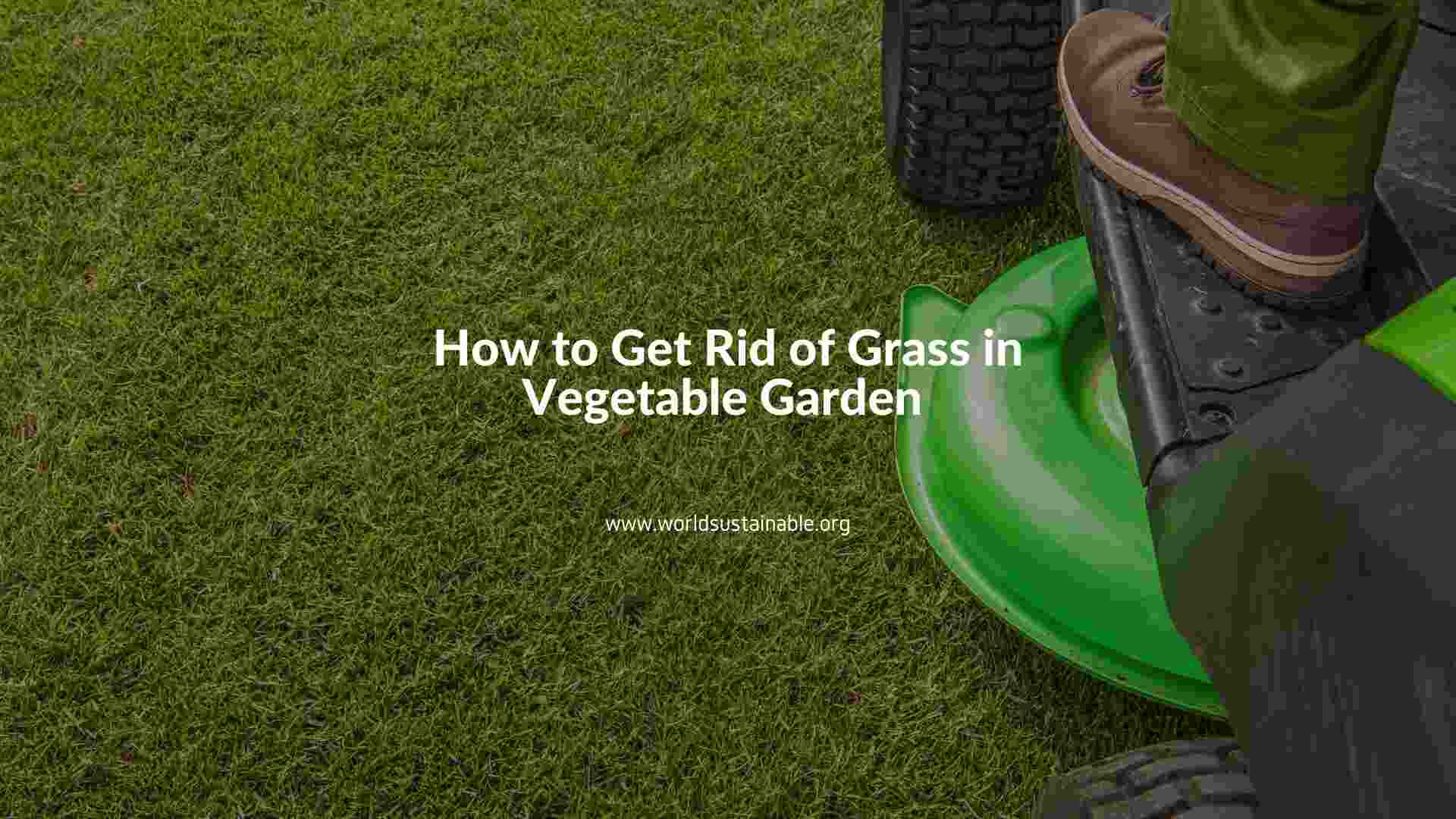 how-to-get-rid-of-grass-in-vegetable-garden