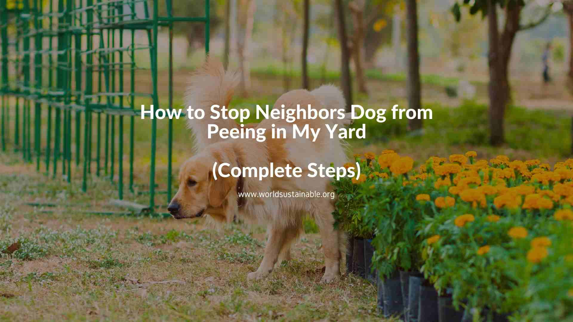 how-to-stop-neighbors-dog-from-peeing-in-my-yard