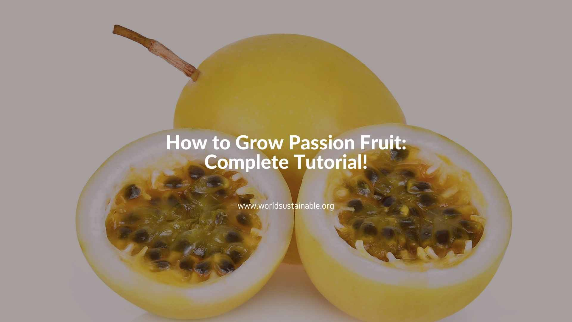 how-to-grow-passion-fruit