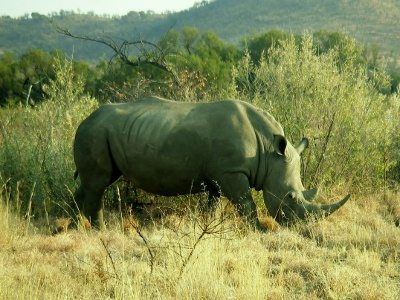 Game reserves in South Africa with children