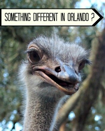 Things to do in Orlando for kids