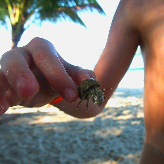Langkawi boy with crab