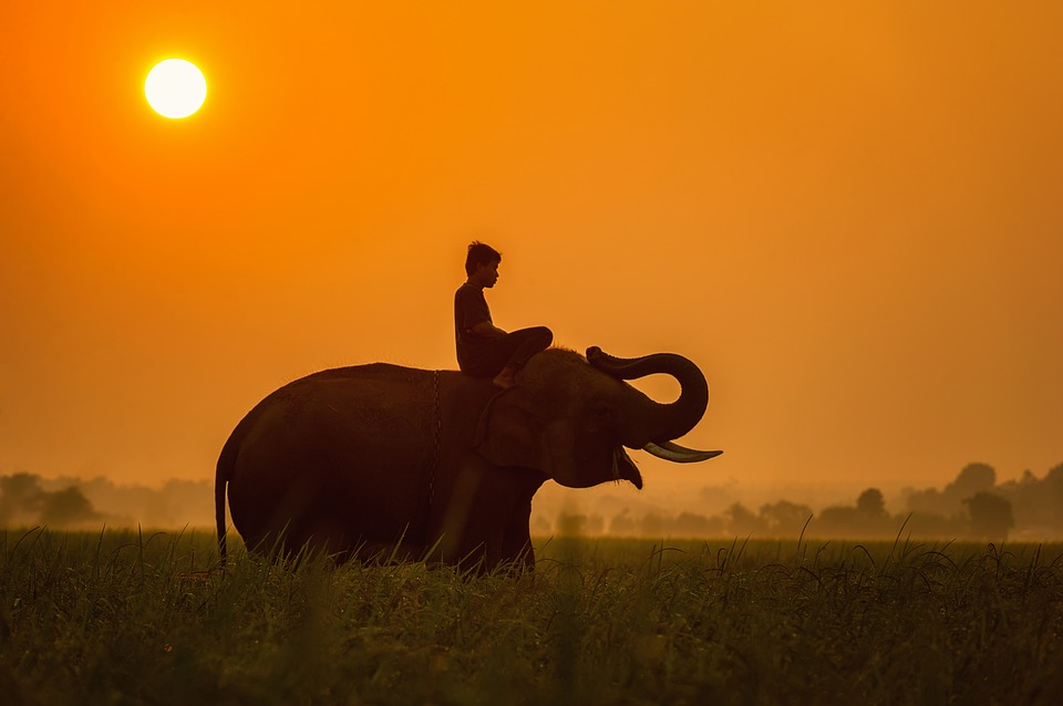 Child taking a ride on an elephant late in the day. Red sunset