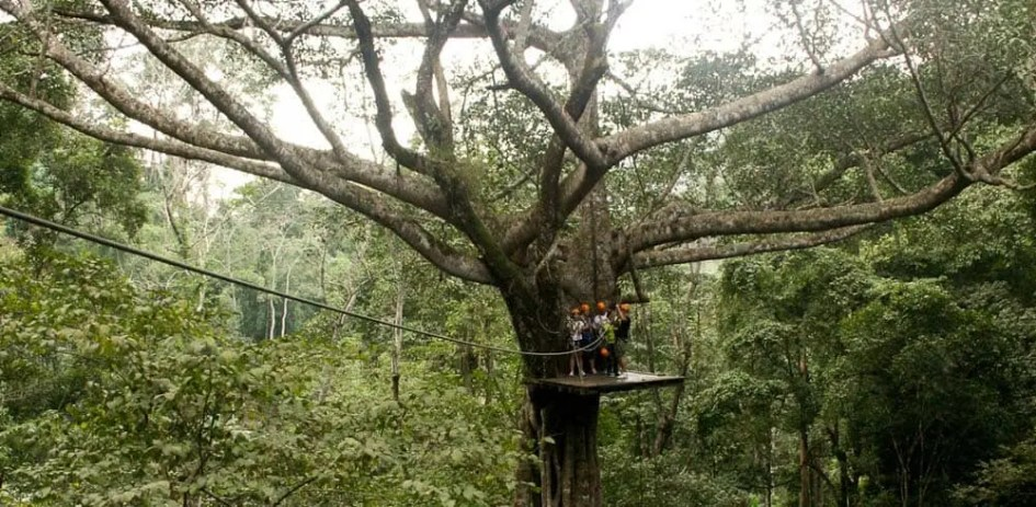 Top things to do in Chiang Mai - Jungle ziplines