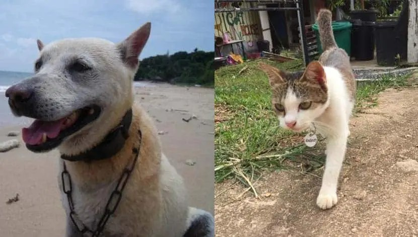 Lanta Animal Welfare Centre dogs