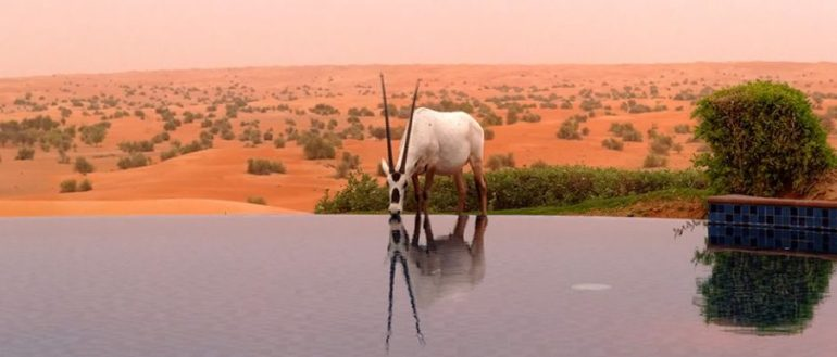 al_maha_desert_resort_spa_dubai_worldtravlr_net (1)