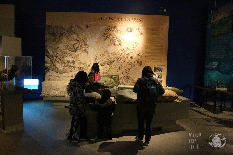 otago museum dunedin