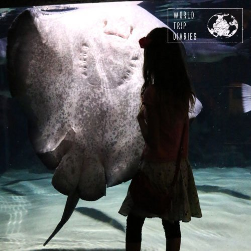 The huge stingray and Melissa