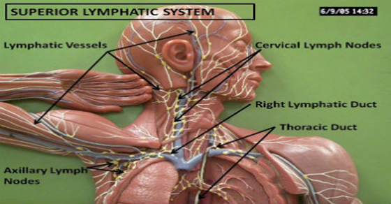 how-to-detox-lymphatic-system