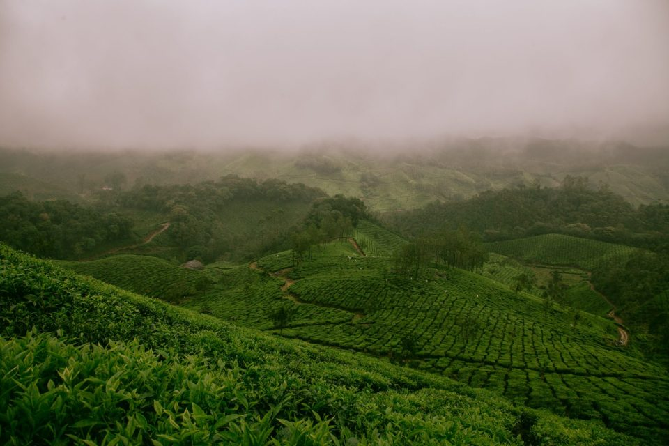 Image of the hillstation Munnar in Kerala