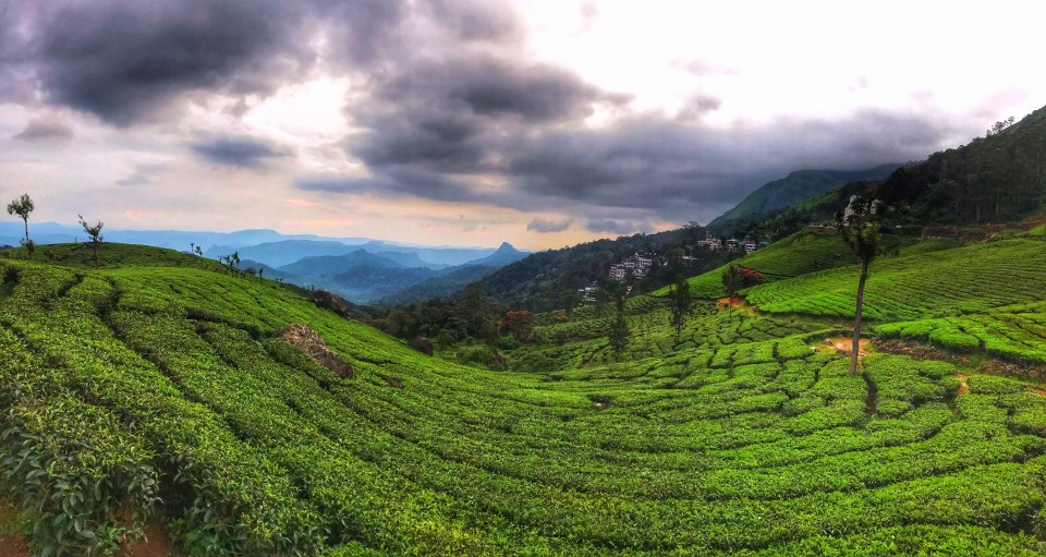 Travel guide to Munnar