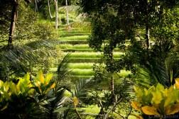 Bali_Ubud_2016_Worldviber_30
