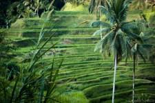 Bali_Ubud_2016_Worldviber_46
