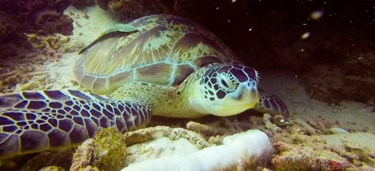 Worldviber: turtle